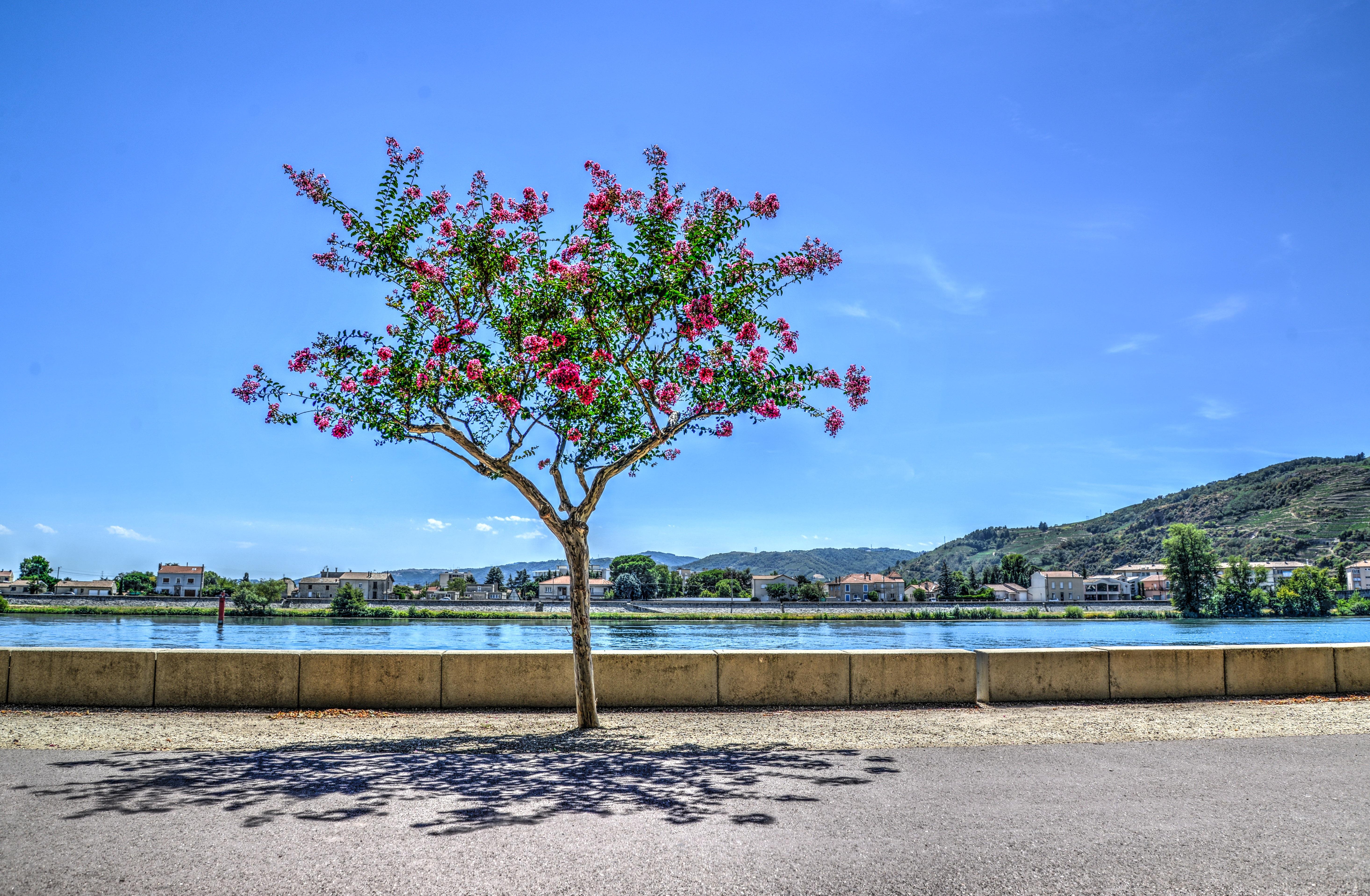 Arbre en bord de Saône