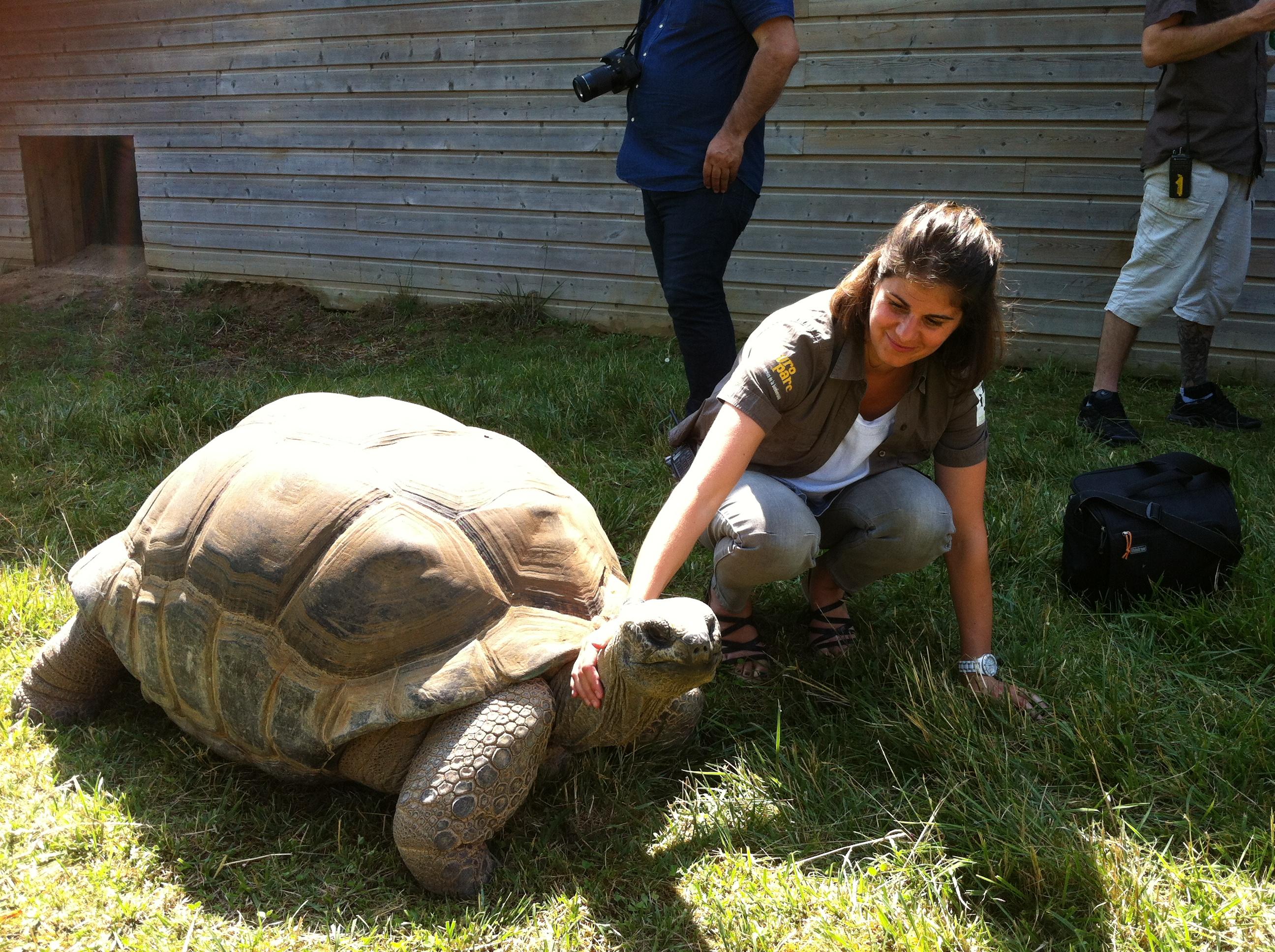 Touroparc.zoo, tortue géante