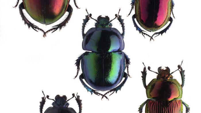 Musée des Confluences : Coléoptères, insectes extraordinaires