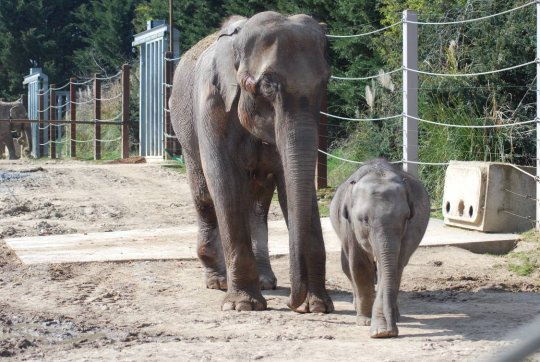 Le PAL : Transfert d'UPALI l'éléphant, de Dublin au PAL